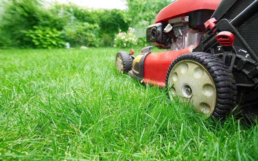 5 Steps to Preparing your Lawn for Summer