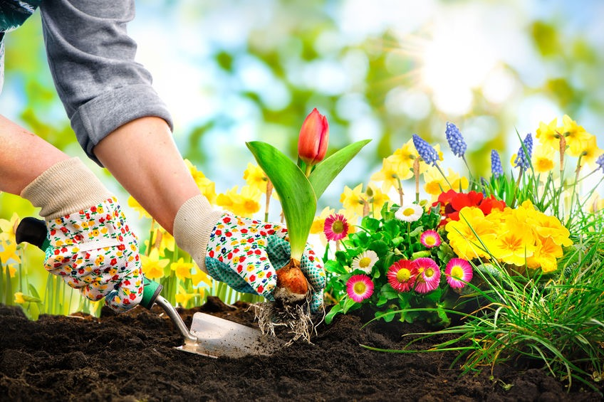 The Top 7 Blogs on Gardening