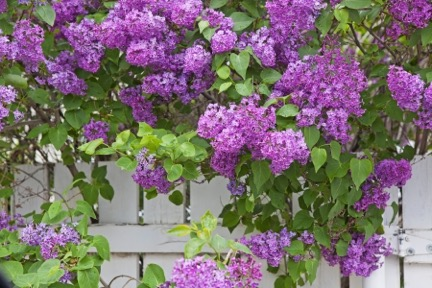 The Best Trees and Shrubs for Wisconsin